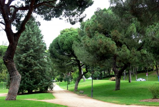 ide to parks in madrid parque del Oeste